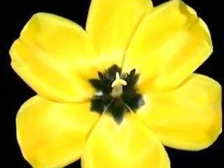 mi regalo una flor para ti